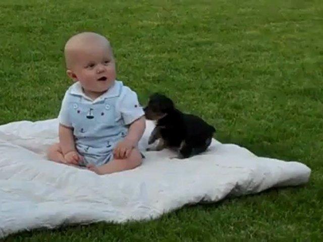 Adorable Puppy Attacks Cute Baby
