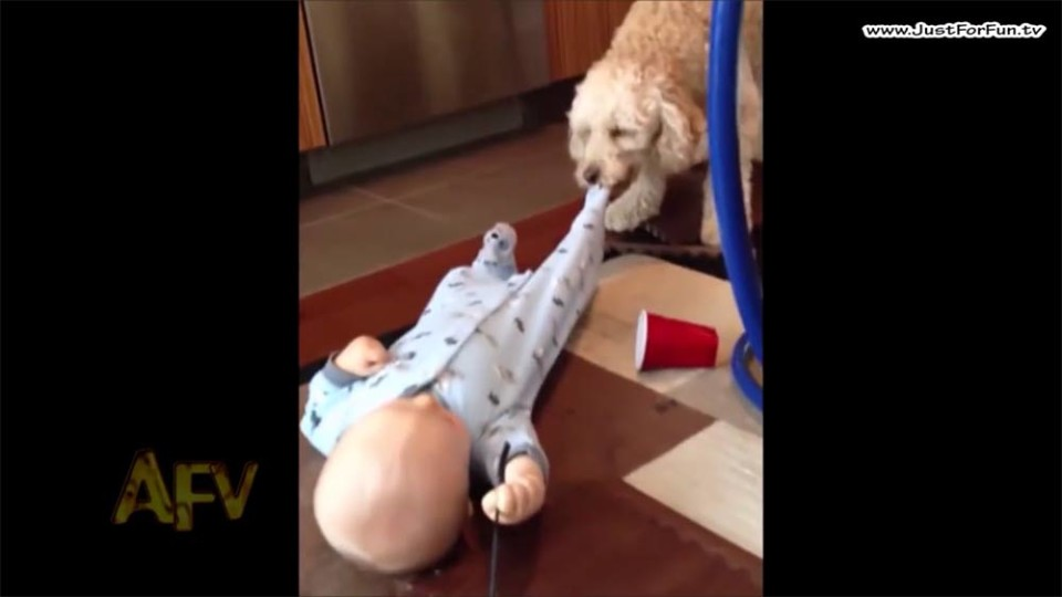 AFV Adorable Babies and Cute Dogs Compilation 2016