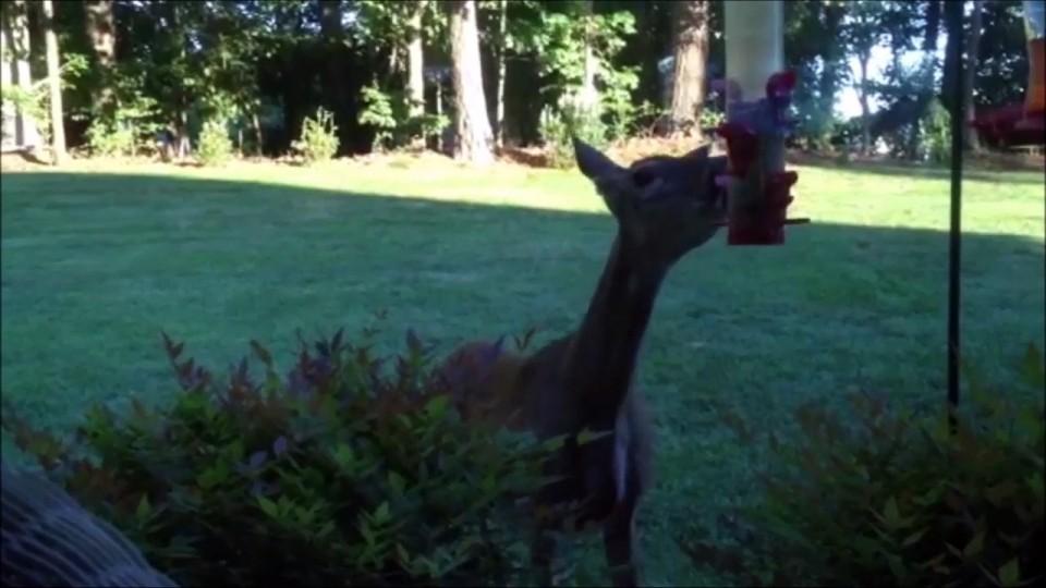 AFV Best Backyard Funny Animals Compilation