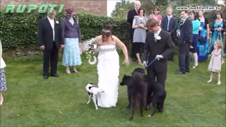 Best of Wedding Funny Fail Moments