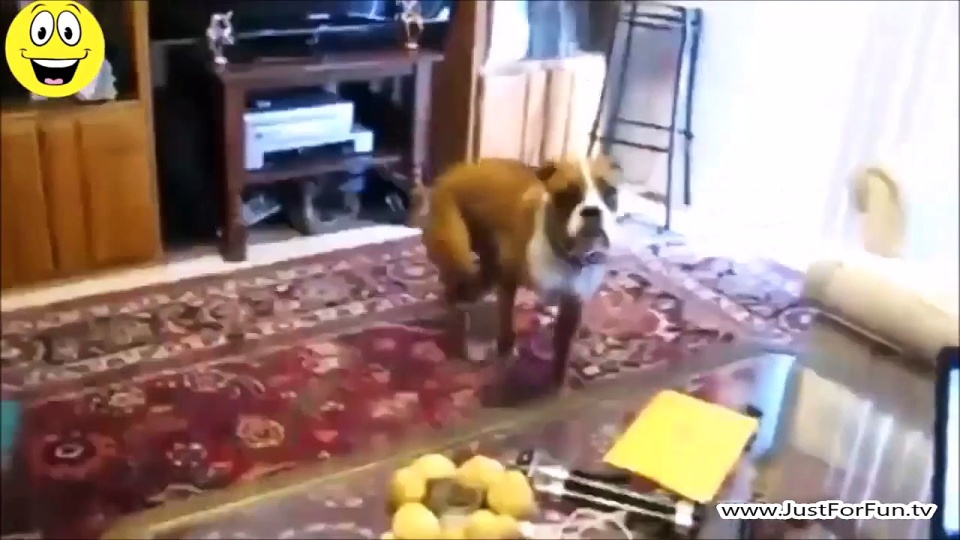 Dogs Scared of Farts Funny Videos 2015 Compilation #7