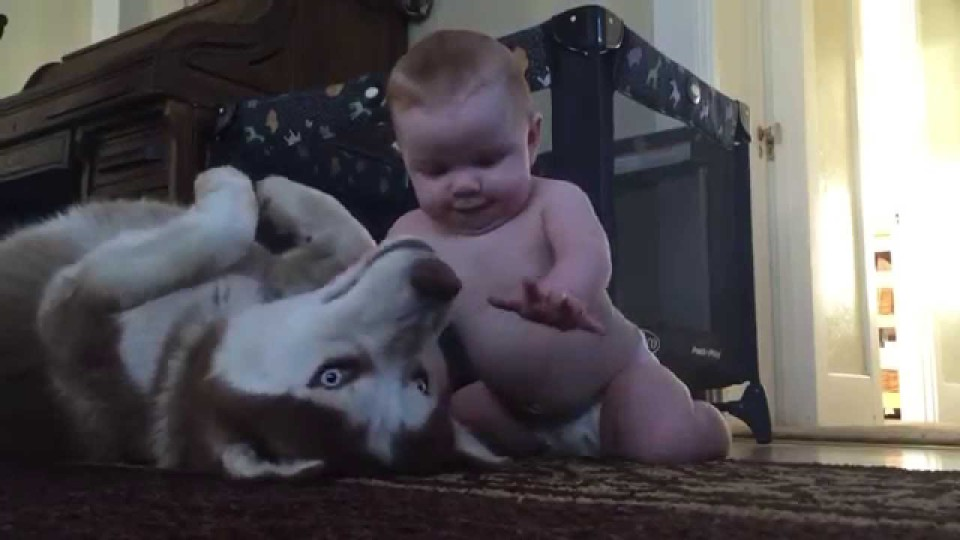 Little Kid Playing With Dog And Showing Love For Each Other