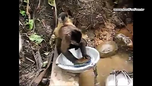 Smart Monkey Washing The Dishes – Very Funny